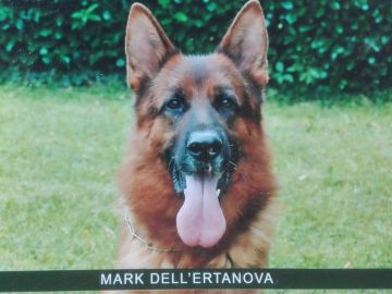 Mark dell'Ertanova